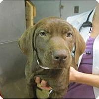 Adopt A Pet :: Elizabeth - Cumming, GA
