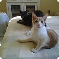 Adopt A Pet :: Bizzo - Modesto, CA