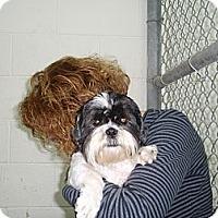 Adopt A Pet :: Joey - Chantilly, VA