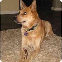 Adopt A Pet :: Rianne - Phoenix, AZ