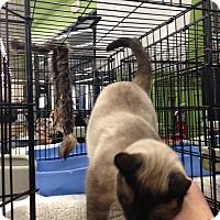 Adopt A Pet :: Zachary - Fairborn, OH