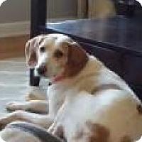 Adopt A Pet :: Lena - Marlton, NJ