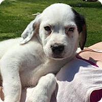 Adopt A Pet :: Ernie - Marlton, NJ