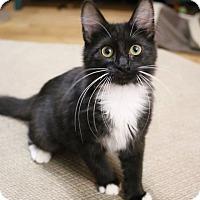 Adopt A Pet :: Jane - Greensboro, GA