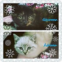 Adopt A Pet :: Adrianna - Mount Laurel, NJ