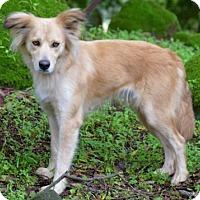 Adopt A Pet :: Jemma - Penngrove, CA