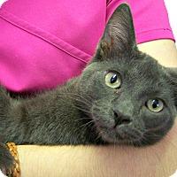 Adopt A Pet :: River Phoenix - Toledo, OH