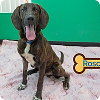 Adopt A Pet :: ROSCOE - Franklin, NC