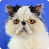 Adopt A Pet :: Bobo - Carencro, LA