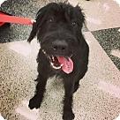 Adopt A Pet :: Mocha