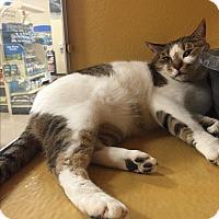 Adopt A Pet :: Toto - Scottsdale, AZ