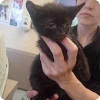 Adopt A Pet :: 5 - Louisville, KY