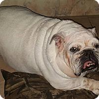 Adopt A Pet :: Marshmellow - Odessa, FL