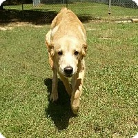 Adopt A Pet :: Baylee - New Canaan, CT