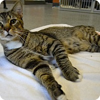 Adopt A Pet :: Titus - Michigan City, IN