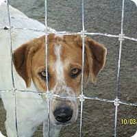 Adopt A Pet :: Rolly - Mexia, TX
