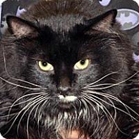 Adopt A Pet :: Nilla - Wildomar, CA