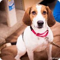 Adopt A Pet :: Jambalaya - Richmond, VA