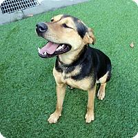 Adopt A Pet :: Edward - Lumberton, NC