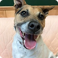 Adopt A Pet :: Russell - Maryville, MO