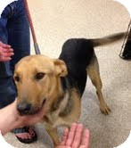 German Shepherd Dog Mix Dog for adoption in Modesto, California - Heidi