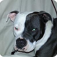 Adopt A Pet :: Melody - sweet! - Sacramento, CA