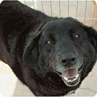 Adopt A Pet :: Diamond - Floresville, TX