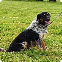 Adopt A Pet :: Rex - Linden, TN