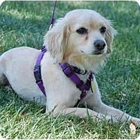Adopt A Pet :: Blake - San Francisco, CA