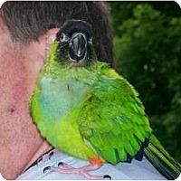 Adopt A Pet :: Iggy - Shawnee Mission, KS