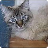 Adopt A Pet :: Cadence - Arlington, VA
