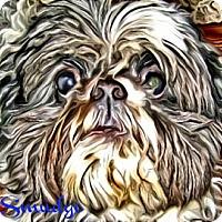 Adopt A Pet :: Smudge-PA - Mays Landing, NJ