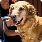 Adopt A Pet :: America