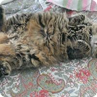 Adopt A Pet :: Cinder - Mount Clemens, MI