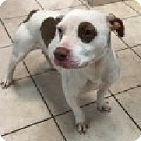 Adopt A Pet :: Faith - Las Vegas, NV