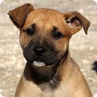 Adopt A Pet :: Kaiser~ meet me! - Glastonbury, CT