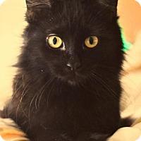 Adopt A Pet :: Amor - Buford, GA