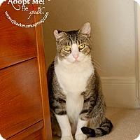 Adopt A Pet :: Sox - Friendswood, TX