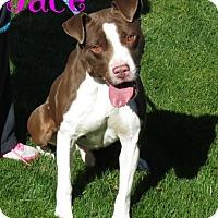 Adopt A Pet :: Jace - Scottsdale, AZ