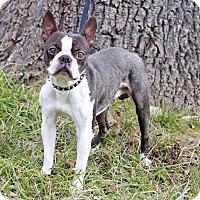 Adopt A Pet :: Thumper - Waldorf, MD