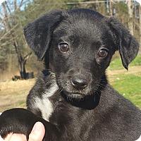 Adopt A Pet :: Micka - Staunton, VA
