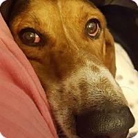Adopt A Pet :: Kramer - Carrollton, TX
