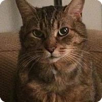 Adopt A Pet :: Jager - Toronto, ON
