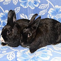 Adopt A Pet :: Hailey and Irene - Chesterfield, MO