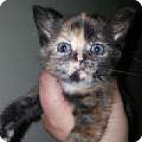Adopt A Pet :: Savi - East Brunswick, NJ