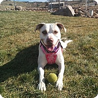 Adopt A Pet :: Chardonnay - Albuquerque, NM