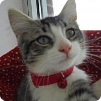 Adopt A Pet :: C4 Litter-Cicily - Livonia, MI