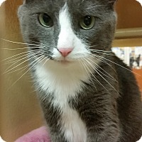 Adopt A Pet :: Cooper - North Haven, CT