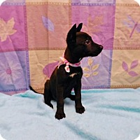 Adopt A Pet :: Lillie Mae-070512j - Tupelo, MS