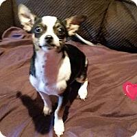 Adopt A Pet :: Dallas - Victorville, CA
